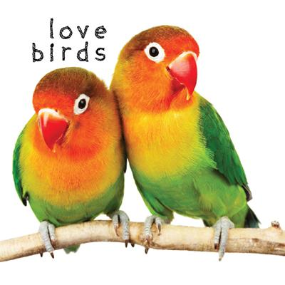 Buy Lovebirds Products Online